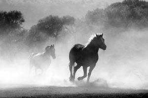 Horses Running to Portray Freedom