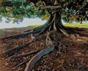 Image: Roots of a Tree, Symbolizing the Foundational Aspects of Growing Wealth